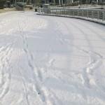 雪やめい!!降るなら別の日にしてくだい。