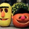 ハロウィンかぼちゃのアレンジ6つ