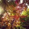 秋真っ盛り!いつものお散歩コースも絶賛紅葉中。